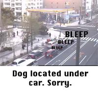 Dog located under car