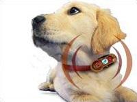Dog wearing dog-mobile phone