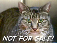 EBay Scraps Live Pet Sales Online