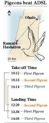 Pigeon Enabled Internet, Faster Than ADSL